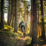 uphill-mtb-forest